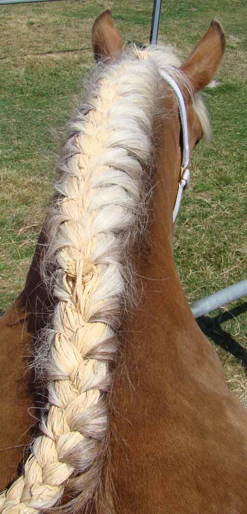Chez le coiffeur - Tresse queue de cheval ...